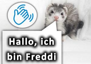 Frettchen-Geschichten-Freddi-neu2